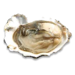 Edible Oysters